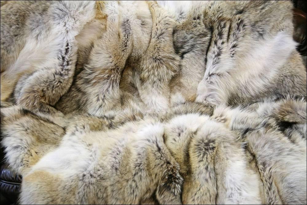 501 kojoten felldecke naturfarben echtpelz tagesdecke. Black Bedroom Furniture Sets. Home Design Ideas